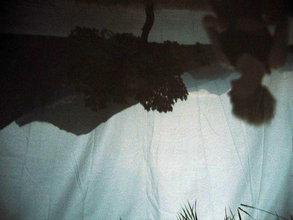 tree_Jenaya3